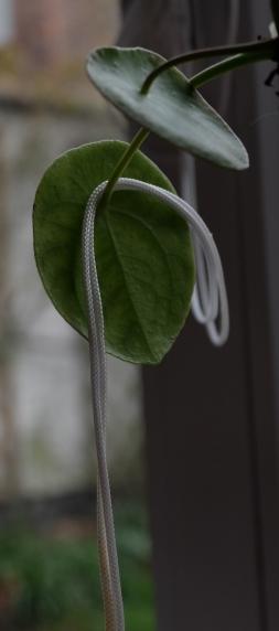 nylonetchlorophylle